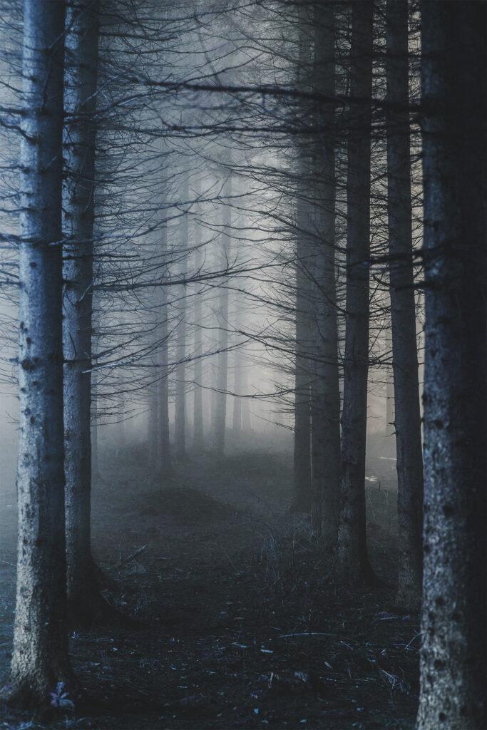 La Forêt de Brocéliande - Les 10 lieux les plus mystérieux de France